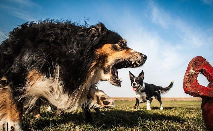 dokonalé skvělé úžasné nejlepší psí momentky obrázky fotografie psů16