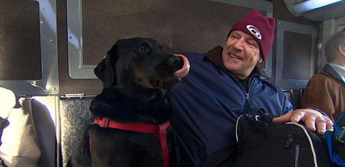 labradorský retrívr labrador pes cestuje sám v autobuse MHD psí samostatnost9