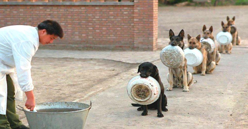 policejní psi v číně čína a psi pes čeká na jídlo krmivo krmení psa náhled psů