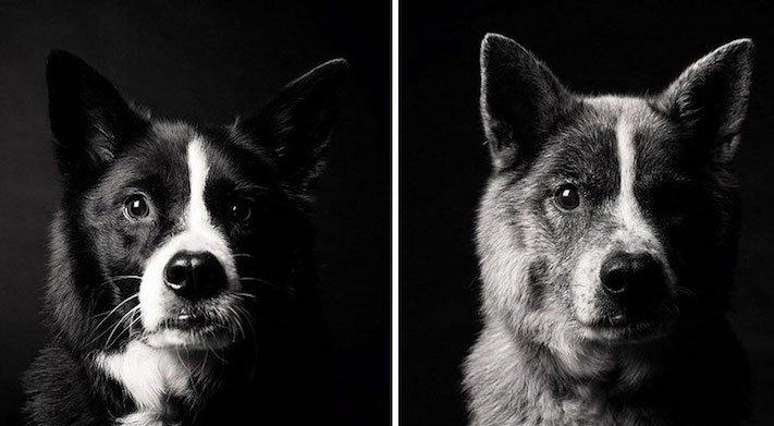 dospívání psů fotografie obrázky fotky od štěněte po stáří psa důchodce2
