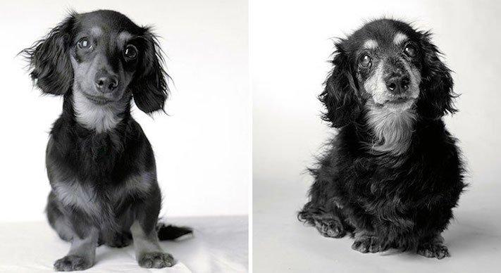 dospívání psů fotografie obrázky fotky od štěněte po stáří psa důchodce3