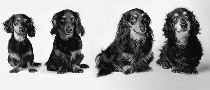 dospívání psů fotografie obrázky fotky od štěněte po stáří psa důchodce3a