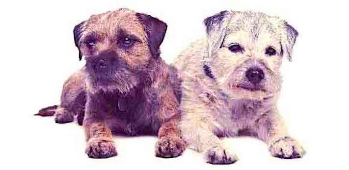dospívání psů fotografie obrázky fotky od štěněte po stáří psa důchodce4
