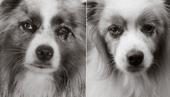 dospívání psů fotografie obrázky fotky od štěněte po stáří psa důchodce5