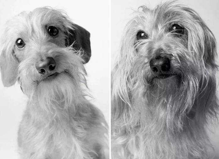 dospívání psů fotografie obrázky fotky od štěněte po stáří psa důchodce8