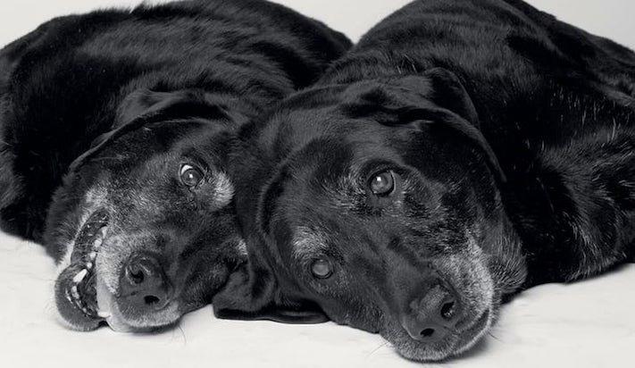 dospívání psů fotografie obrázky fotky od štěněte po stáří psa důchodce9
