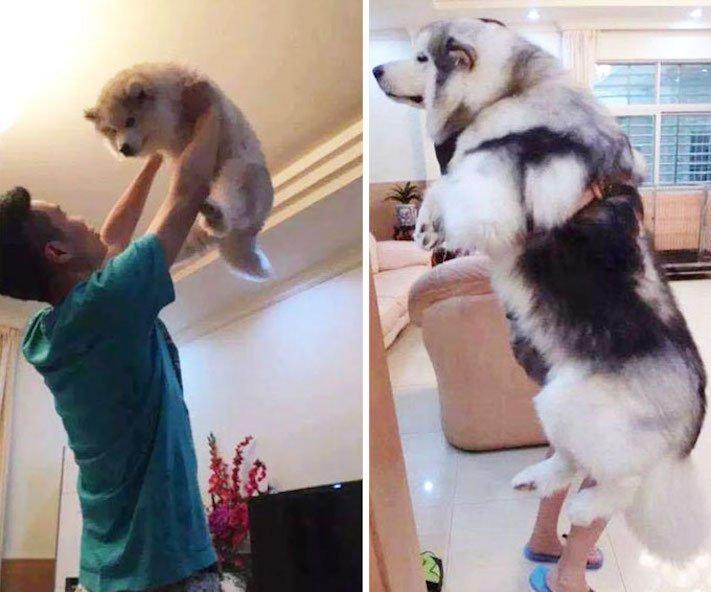 vyrůstání dospívání psů psa stárnutí rozdíly u psů během věku obrázky1