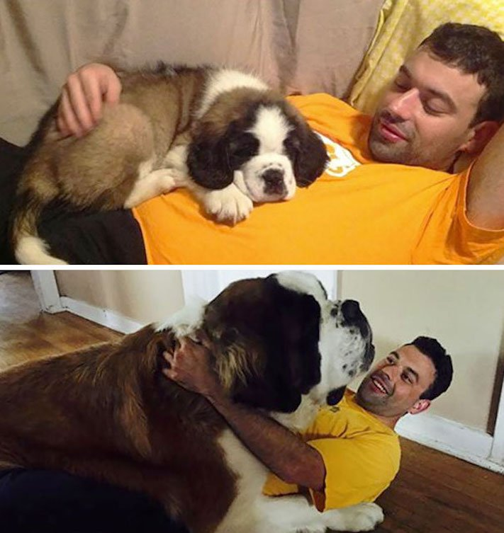 vyrůstání dospívání psů psa stárnutí rozdíly u psů během věku obrázky5