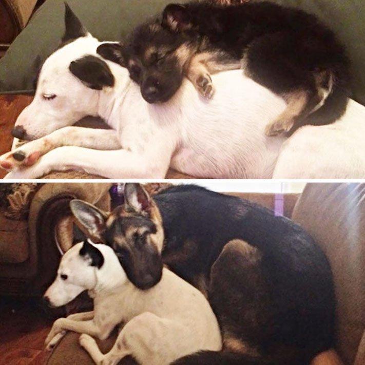 vyrůstání dospívání psů psa stárnutí rozdíly u psů během věku obrázky4
