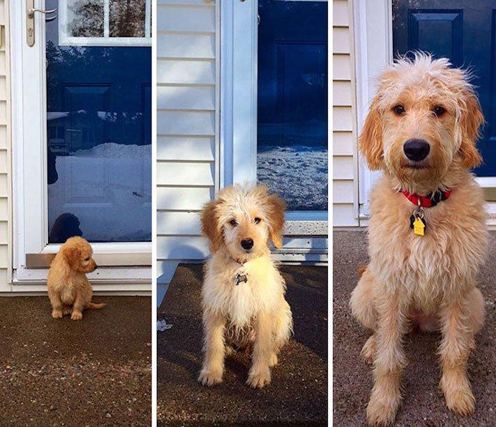 vyrůstání dospívání psů psa stárnutí rozdíly u psů během věku obrázky9