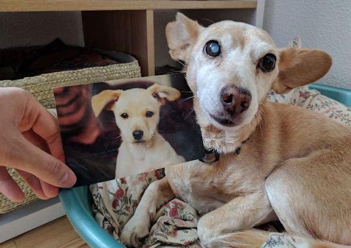 vyrůstání dospívání psů psa stárnutí rozdíly u psů během věku obrázky8