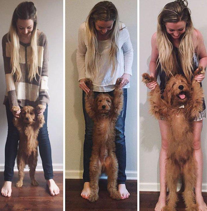 vyrůstání dospívání psů psa stárnutí rozdíly u psů během věku obrázky10
