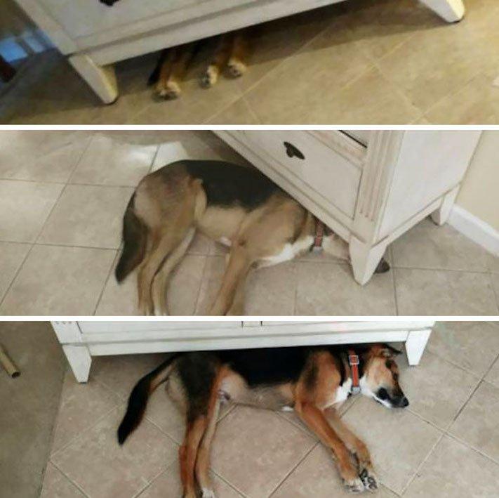 vyrůstání dospívání psů psa stárnutí rozdíly u psů během věku obrázky11