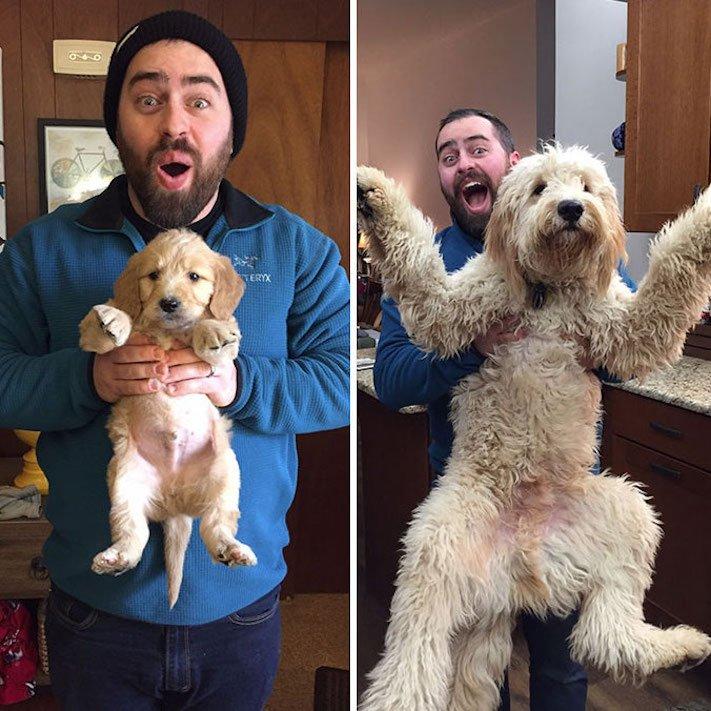 vyrůstání dospívání psů psa stárnutí rozdíly u psů během věku obrázky13