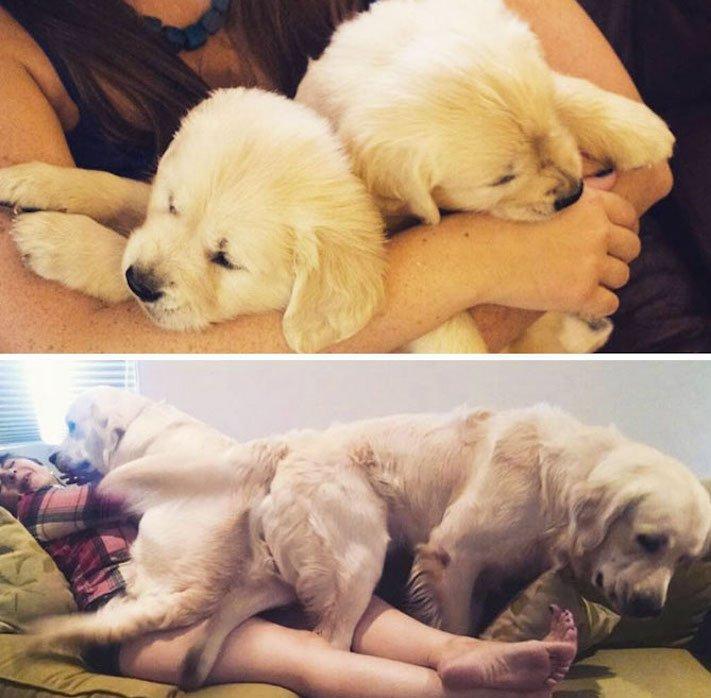 vyrůstání dospívání psů psa stárnutí rozdíly u psů během věku obrázky14