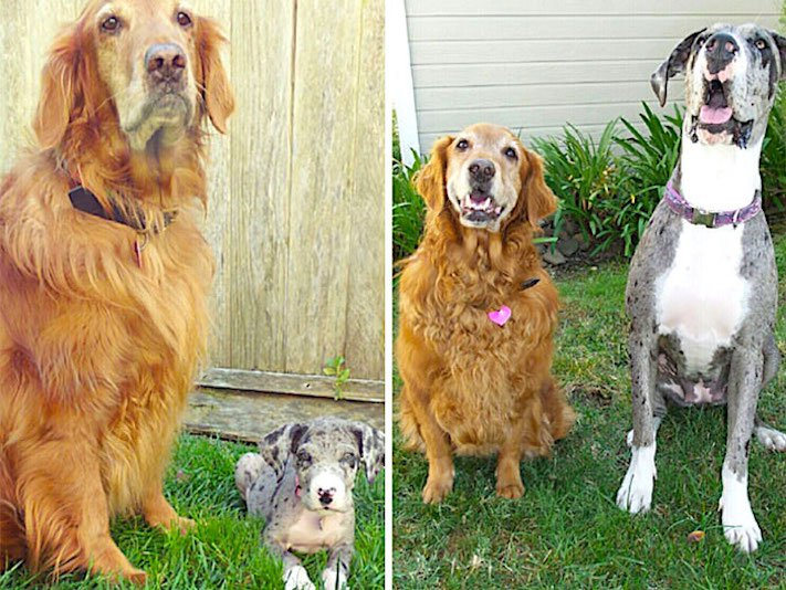 vyrůstání dospívání psů psa stárnutí rozdíly u psů během věku obrázky17