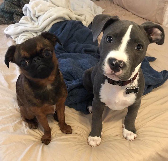 pes první den v novém domově obrázky rady tipy problémy řešení pomoc psům z útulku1