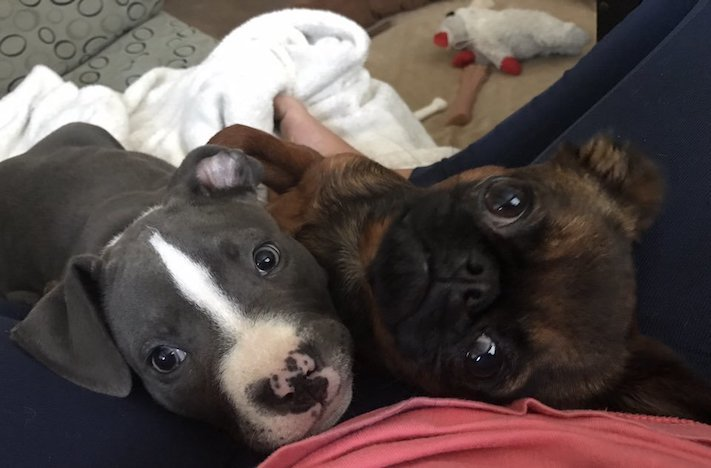 pes první den v novém domově obrázky rady tipy problémy řešení pomoc psům z útulku2
