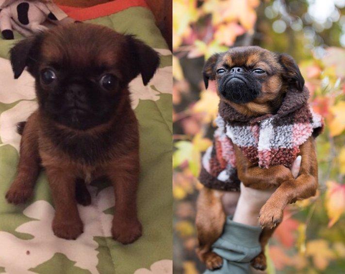 pes první den v novém domově obrázky rady tipy problémy řešení pomoc psům z útulku3