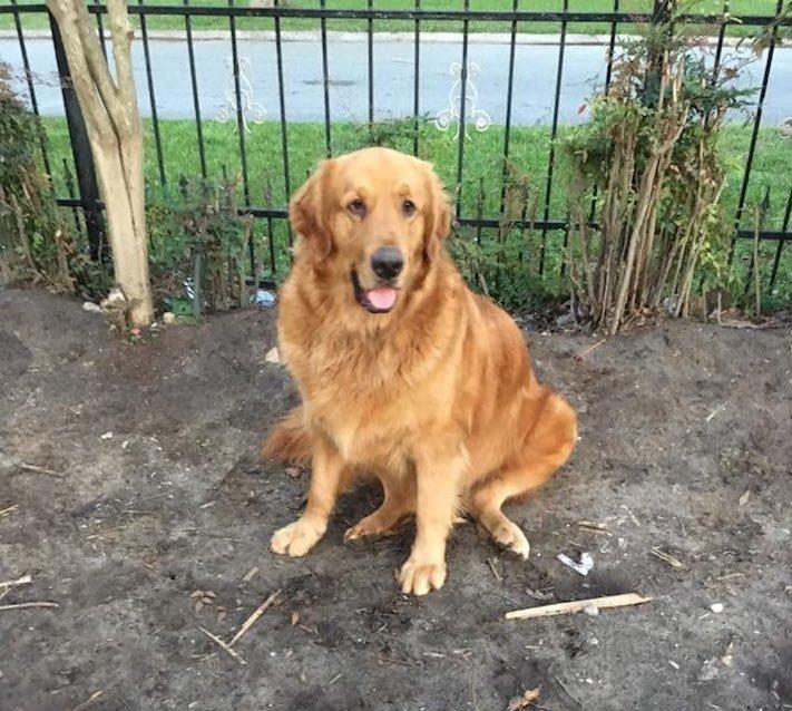 pes první den v novém domově obrázky rady tipy problémy řešení pomoc psům z útulku5b