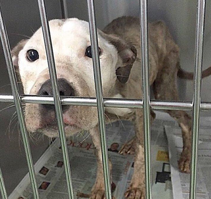 pes první den v novém domově obrázky rady tipy problémy řešení pomoc psům z útulku6
