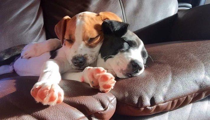 pes první den v novém domově obrázky rady tipy problémy řešení pomoc psům z útulku7