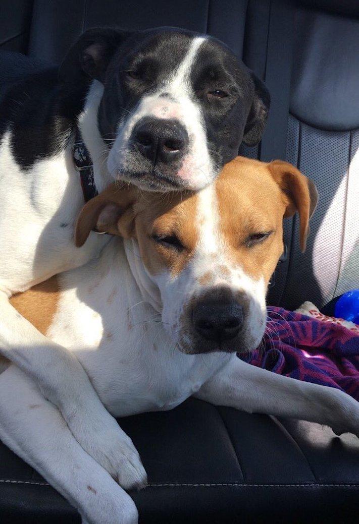 pes první den v novém domově obrázky rady tipy problémy řešení pomoc psům z útulku7b