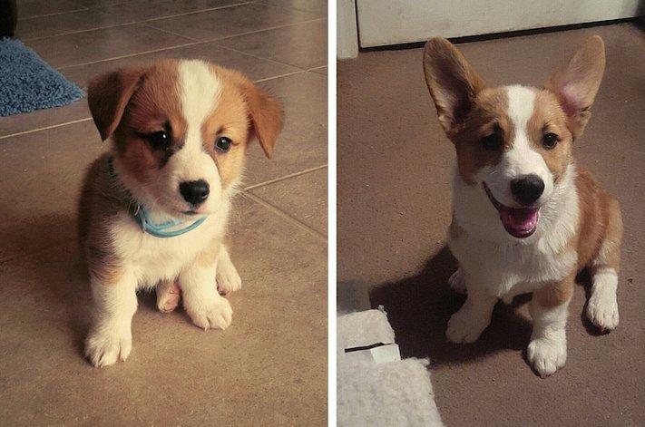 pes první den v novém domově obrázky rady tipy problémy řešení pomoc psům z útulku8
