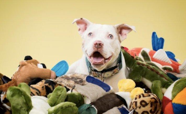pes je tlustý co dělat nadváha psa řešení příbeh obézní pes proměna jak snížit váhu u psa5