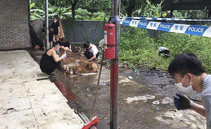 psi v číně převoz psů na jatka záchrana převážených psů čína a psi10