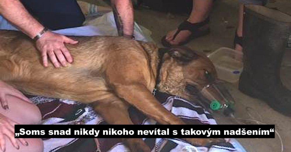hasiči zachraňují psa záchrana psa od hasičů poskytnutí první pomoci psovi v bezvědomí náhled