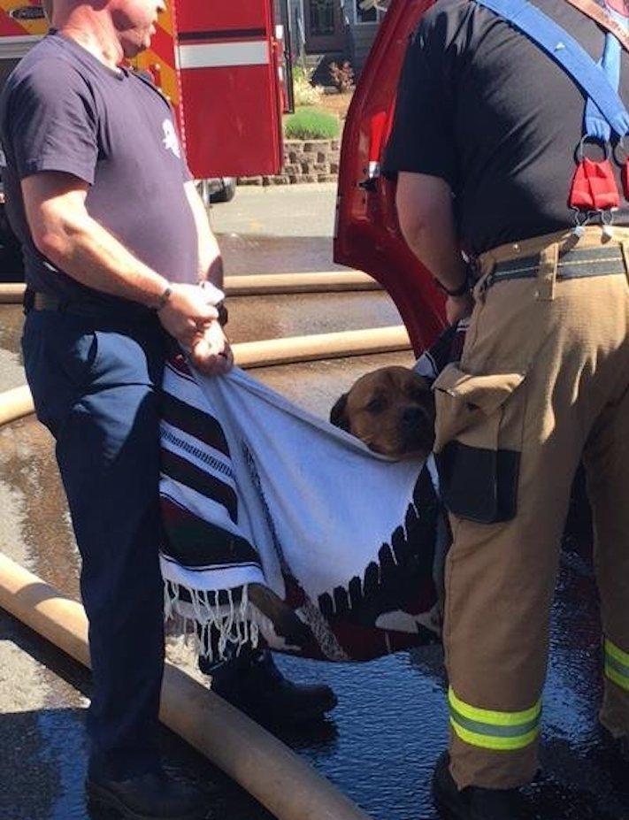 hasiči zachraňují psa záchrana psa od hasičů poskytnutí první pomoci psovi v bezvědomí3