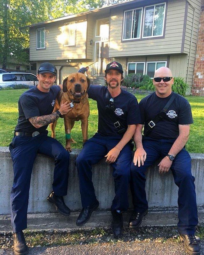 hasiči zachraňují psa záchrana psa od hasičů poskytnutí první pomoci psovi v bezvědomí4