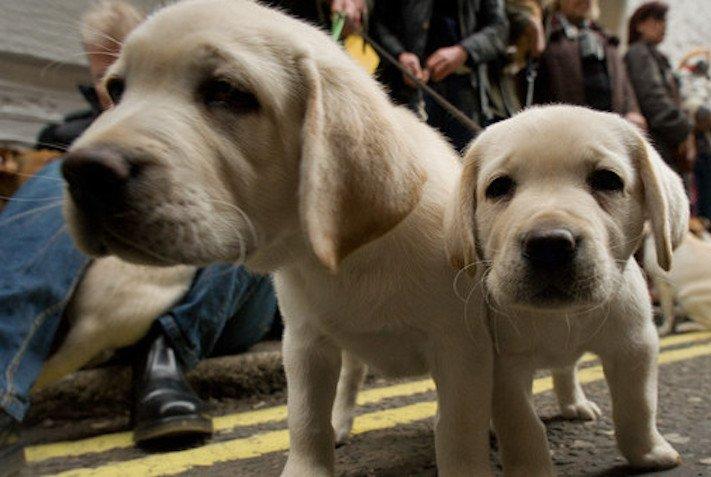 psí výzkum o psech se psy vlív psů na lidi lidskou psychiku empatii morálku pracovní školní studijní výsledky v testech na zkouškách1