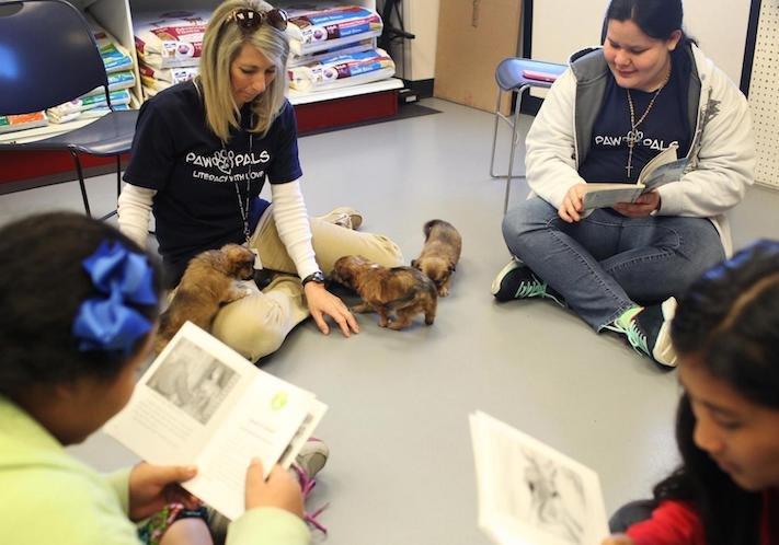 psí výzkum o psech se psy vlív psů na lidi lidskou psychiku empatii morálku pracovní školní studijní výsledky v testech na zkouškách3