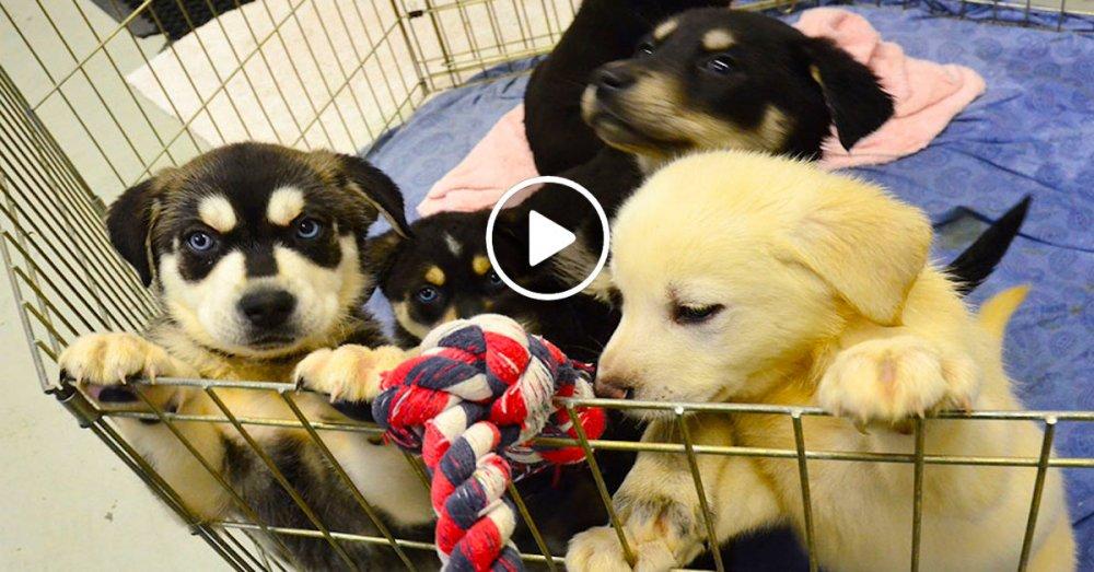 štěňata ve školách pes ve škole studenti se psy vylepšení studijních výsledků náhled