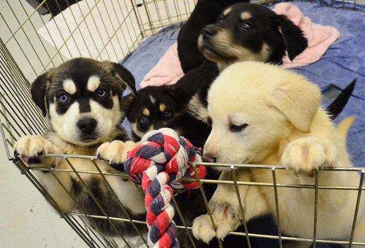 štěňata ve školách pes ve škole studenti se psy vylepšení studijních výsledků1