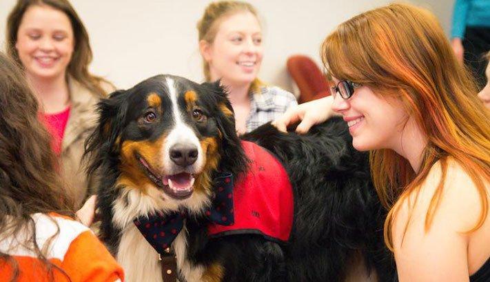 štěňata ve školách pes ve škole studenti se psy vylepšení studijních výsledků3