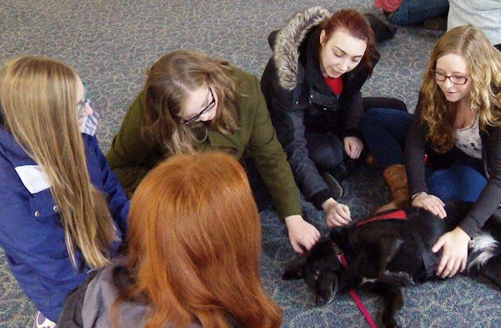 štěňata ve školách pes ve škole studenti se psy vylepšení studijních výsledků4