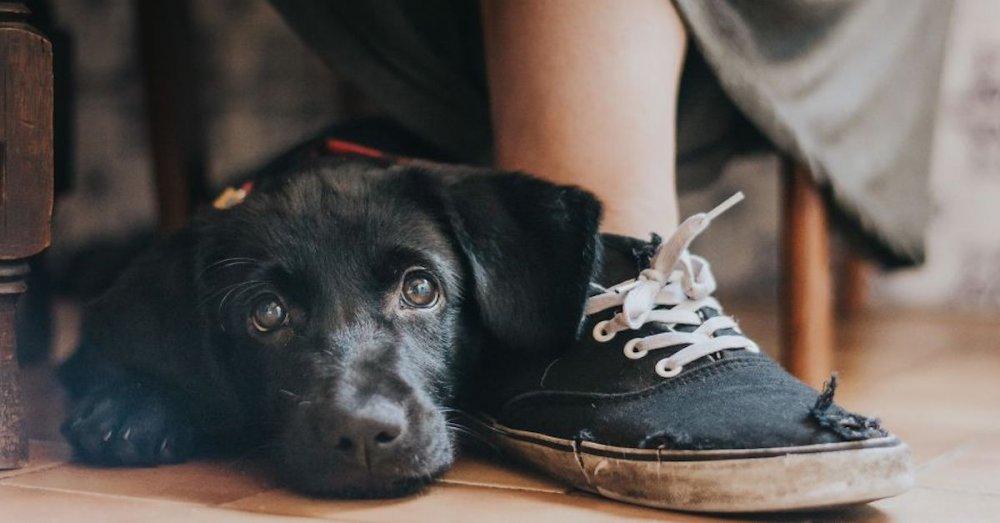 celkově nejlepší psí fotografie psů roku 2017 2018_náhled