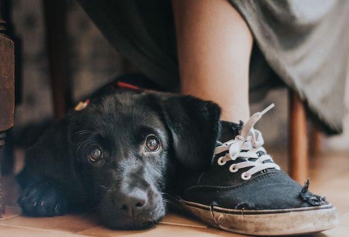 celkově nejlepší psí fotografie psů roku 2017 2018_1