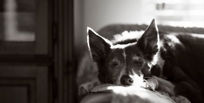 celkově nejlepší psí fotografie psů roku 2017 2018_7