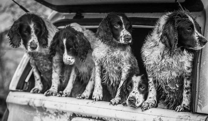 celkově nejlepší psí fotografie psů roku 2017 2018_10