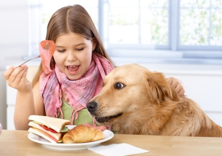 psi pes kradou krade jídlo krmivo vtipné zábavné obrázky psů5