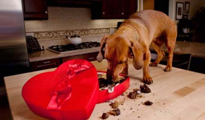 psi pes kradou krade jídlo krmivo vtipné zábavné obrázky psů6