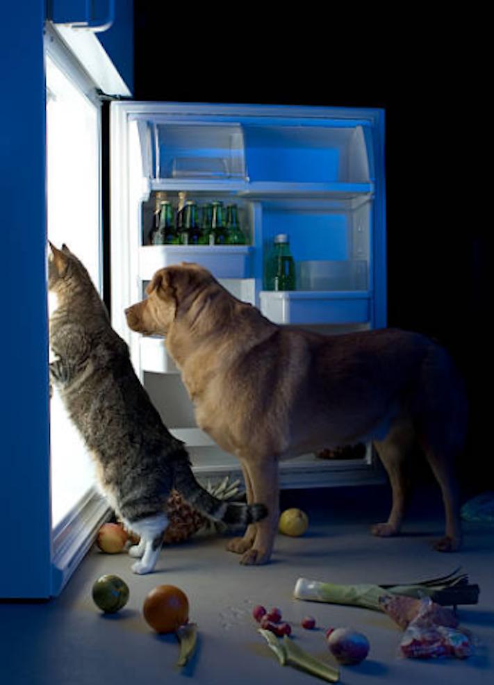 psi pes kradou krade jídlo krmivo vtipné zábavné obrázky psů11