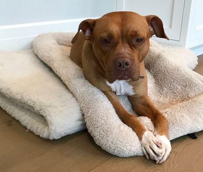 týrání psů týraný pes celý život uvázaný pes psí příběhy psů5