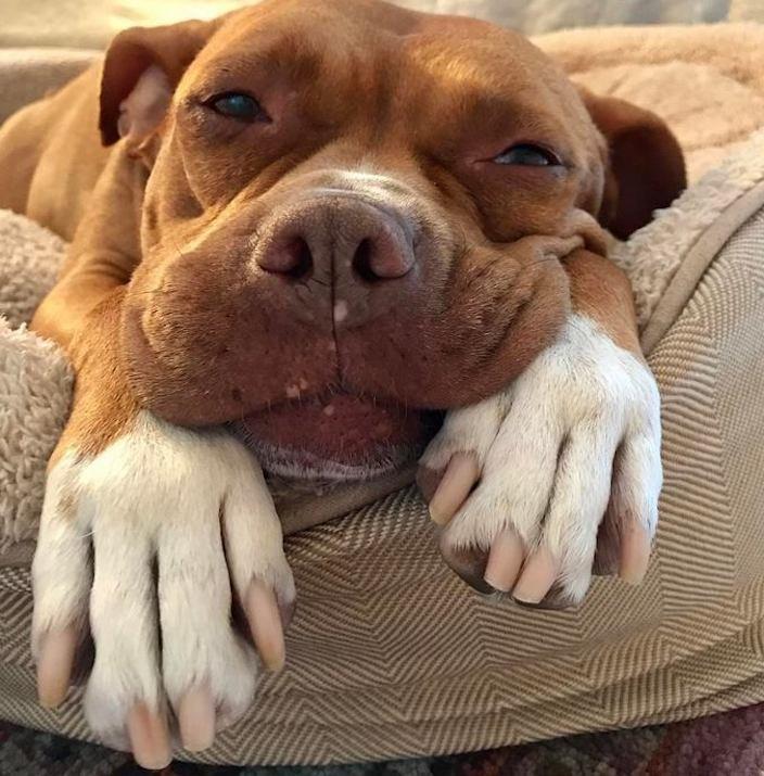 týrání psů týraný pes celý život uvázaný pes psí příběhy psů10