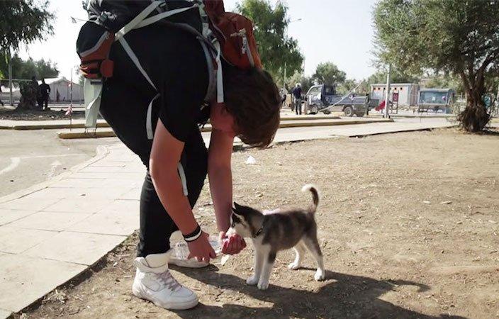 dlouhá cesta cestování se psem štěnětem štěně do řecka ze sýrie3