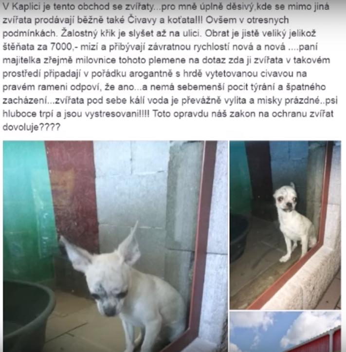 týraní psů v české republice ve zverimexech zoo faktor shop čivava3